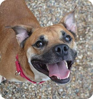 Mixed Breed (Medium) Mix Dog for adoption in Rockford, Illinois - Buster