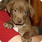 Adopt A Pet :: Milky Way