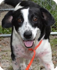 Hound (Unknown Type) Mix Dog for adoption in Gainesville, Florida - Betsy