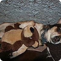 Adopt A Pet :: Brutus - Shawnee Mission, KS