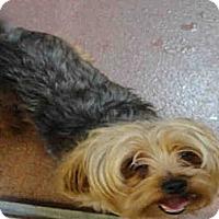 Adopt A Pet :: Boomer - North Ogden, UT