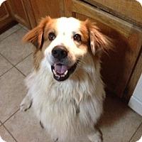 Adopt A Pet :: Ford - Phoenix, AZ