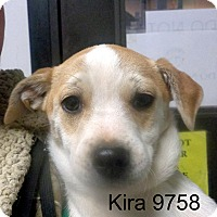 Adopt A Pet :: Kira - baltimore, MD