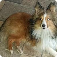Adopt A Pet :: Kudzou - Mission, KS