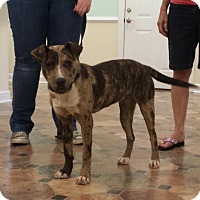 Adopt A Pet :: DAKOTA - Wilmington, NC