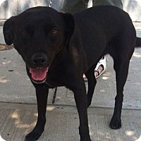Adopt A Pet :: Annie - Bridgewater, NJ