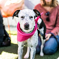 Adopt A Pet :: Olive - Los Angeles, CA