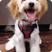 Adopt A Pet :: Azel - Santa Barbara, CA