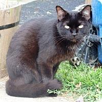 Adopt A Pet :: Little Bit - Nolensville, TN