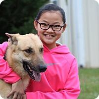 Adopt A Pet :: Raji - Greeneville, TN