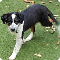 Adopt A Pet :: Fergie - Highland, IL