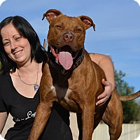 American Pit Bull Terrier Mix Dog for adoption in Phoenix, Arizona - Phoenix