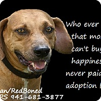 Adopt A Pet :: Buster - Englewood, FL