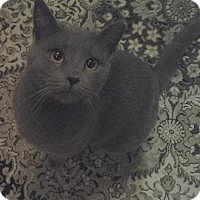 Adopt A Pet :: Sassafras - Bear, DE