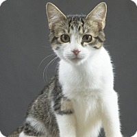 Adopt A Pet :: Janey - Oklahoma City, OK