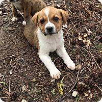 Adopt A Pet :: Zooey - Hohenwald, TN