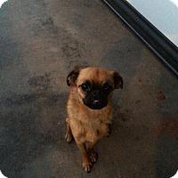 Adopt A Pet :: Linus - Edmond, OK