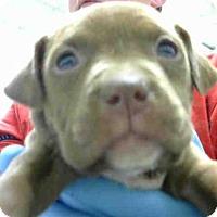 Adopt A Pet :: A272922 - Conroe, TX