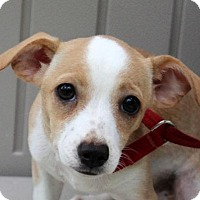 Adopt A Pet :: Evanna Leigh - Yardley, PA