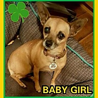 Adopt A Pet :: Baby Girl - Scottsdale, AZ