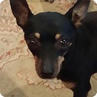 Adopt A Pet :: Duncan - Columbus, IN