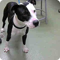 Adopt A Pet :: URGENT 10/19 @ DEVORE - San Bernardino, CA