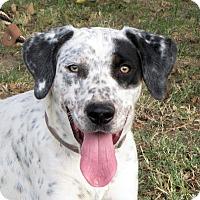 Adopt A Pet :: Chloe - Turlock, CA