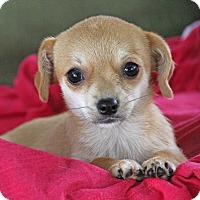 Adopt A Pet :: Ruby - Yuba City, CA