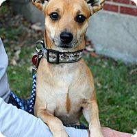 Adopt A Pet :: Cesar - Mt. Prospect, IL