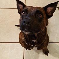 Adopt A Pet :: Biscuit - Orlando, FL