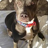 Adopt A Pet :: Rosko - Las Vegas, NV