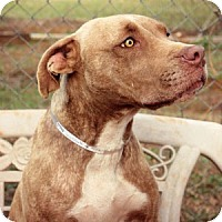 Adopt A Pet :: Lady - Athens, GA