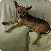 Adopt A Pet :: Dylan - Poway, CA