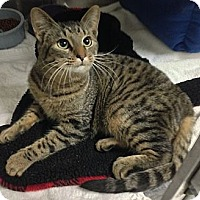 Adopt A Pet :: Antonio - Fairfield, CT