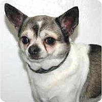 Adopt A Pet :: Gogo - Port Washington, NY