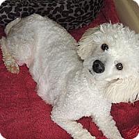 Adopt A Pet :: Faith - La Habra Heights, CA