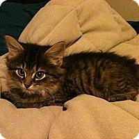 Adopt A Pet :: Dexter - Sterling Hgts, MI