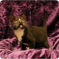 Adopt A Pet :: Pepe - Sacramento, CA