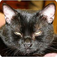 Adopt A Pet :: Wyla - Bonita Springs, FL