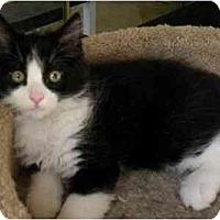 Adopt A Pet :: Tommy - Irvine, CA
