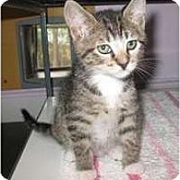 Adopt A Pet :: Rina - Shelton, WA