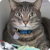 Adopt A Pet :: Navajo - Merrifield, VA