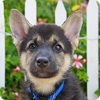 Adopt A Pet :: Christopher von Calw - Thousand Oaks, CA