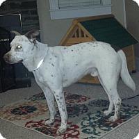 Adopt A Pet :: Will - Albemarle, NC