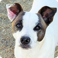 Adopt A Pet :: Jenna In Fredericksburg, Texas - Austin, TX