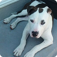 Adopt A Pet :: Zahara - Fort Collins, CO