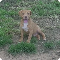 Adopt A Pet :: Chauncy Adoption pending - Manchester, CT