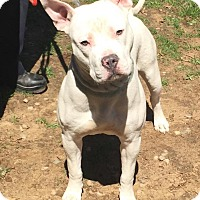 Adopt A Pet :: BASIL - Bloomfield, CT