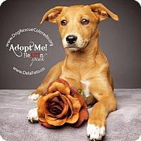 Adopt A Pet :: Lexi - Aurora, CO