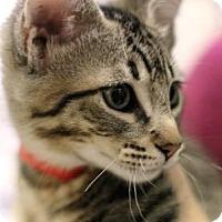 Adopt A Pet :: TORNADO - Kyle, TX